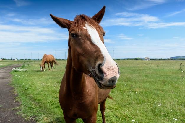 夏の美しい赤い馬の肖像画 Premium写真