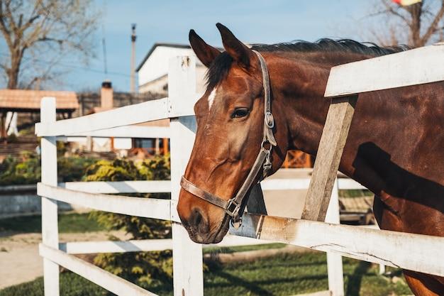 Портрет красивой рыжей лошади с белым пятном на носу Premium Фотографии