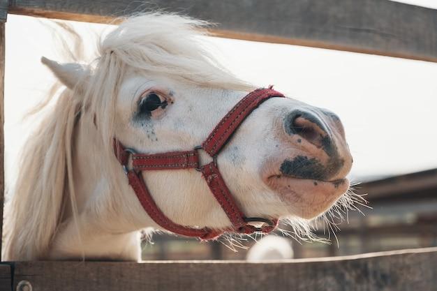 Портрет красивой белой милой лошади. симпатичный портрет белой лошади, милое лицо Premium Фотографии