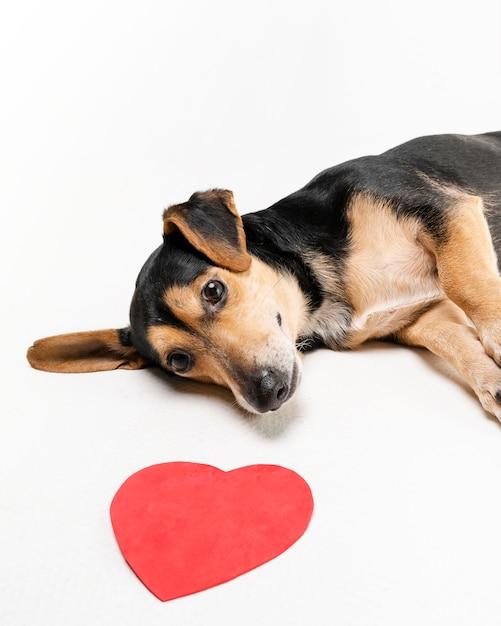 リラックスしたかわいい犬の肖像画 Premium写真