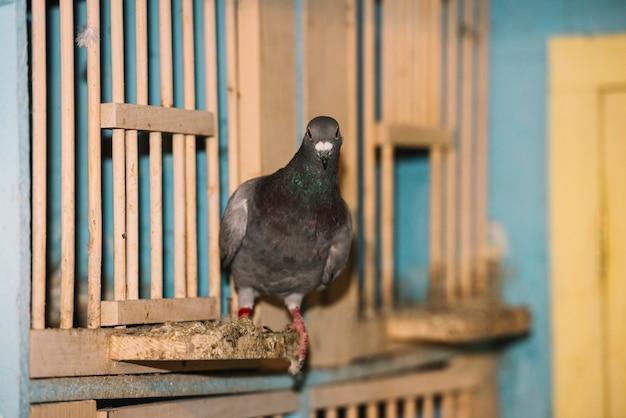 Портрет взгромоздившегося голубя Бесплатные Фотографии