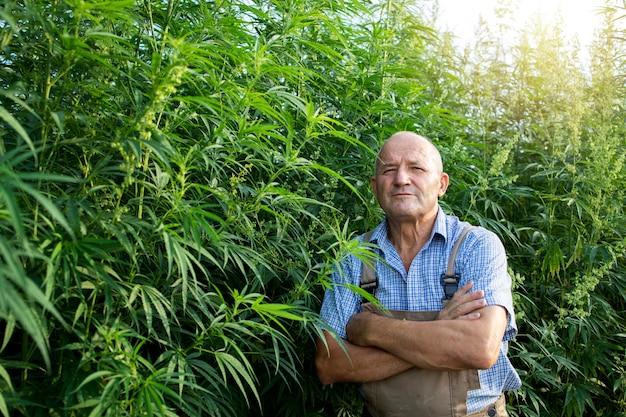 Портрет старшего агронома, стоящего у поля конопли или каннабиса Бесплатные Фотографии