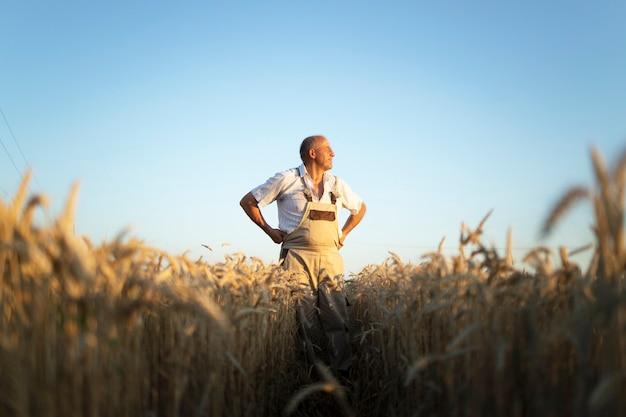 遠くを見ている麦畑の上級農学者の肖像画 無料写真