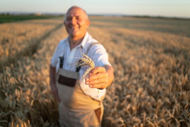 小麦畑に立って小麦作物を保持している成功したシニアファーマー農学者の肖像画 無料写真