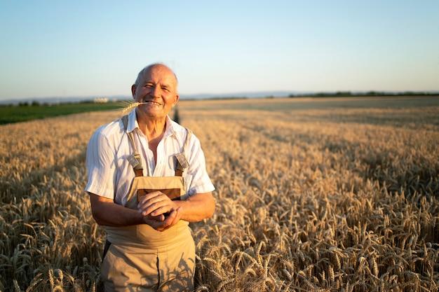 小麦畑に立っている成功したシニアファーマー農学者の肖像画 無料写真
