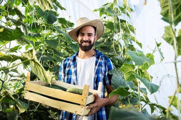 温室で新鮮なキュウリでいっぱいの木枠を保持している若いひげを生やした農夫の肖像画 無料写真