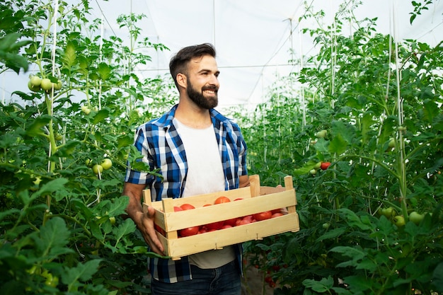 摘みたてのトマト野菜と温室の庭に立っている若い笑顔の農家の肖像画 無料写真