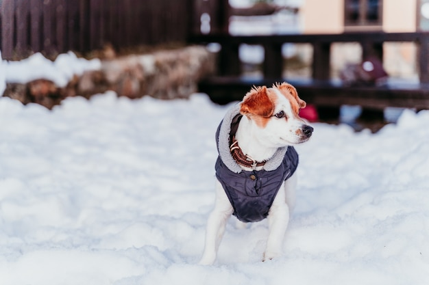 Portrait outdoors of a beautiful jack russell dog at the snow wearing grey coat. Premium Photo
