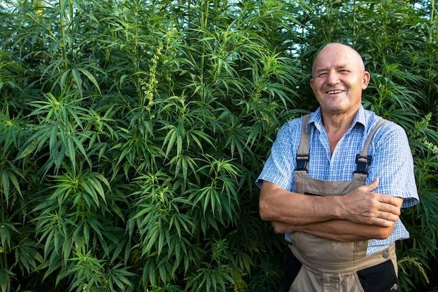 Portrait of senior agronomist standing by hemp or cannabis field Free Photo