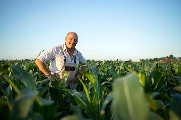 Ritratto di senior laborioso agricoltore agronomo nel campo di mais che controlla i raccolti prima del raccolto Foto Gratuite