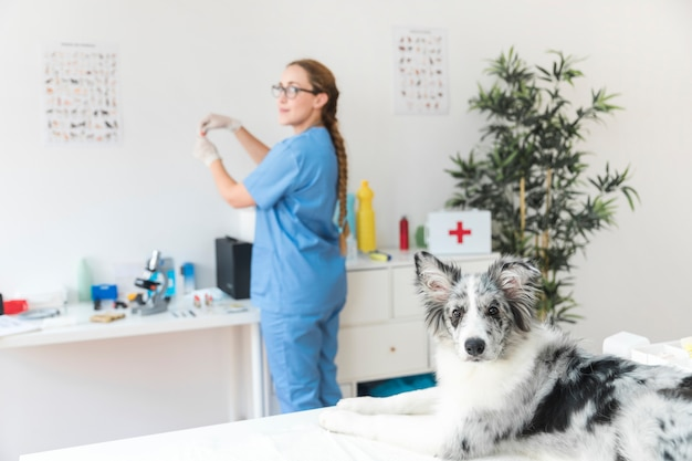 Portrait of a sick dog on table with female veterinarian standing in the background Free Photo