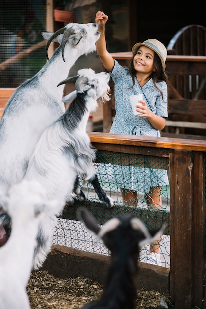 Portrait of a smiling girl feeding chips to goat in the barn Free Photo