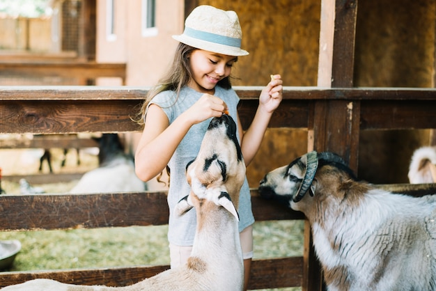 Portrait of a smiling girl feeding food to sheep in the farm Free Photo