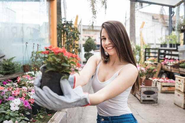 Portrait of a smiling young woman showing red flowering plant in the greenhouse Free Photo