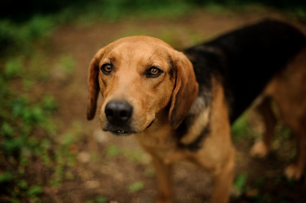 Portrait of standing brown puppy in the forest Premium Photo