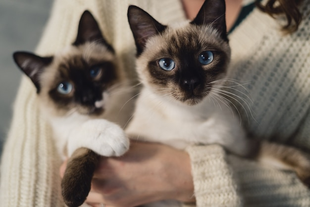 Portrait two identical siamese cats Free Photo