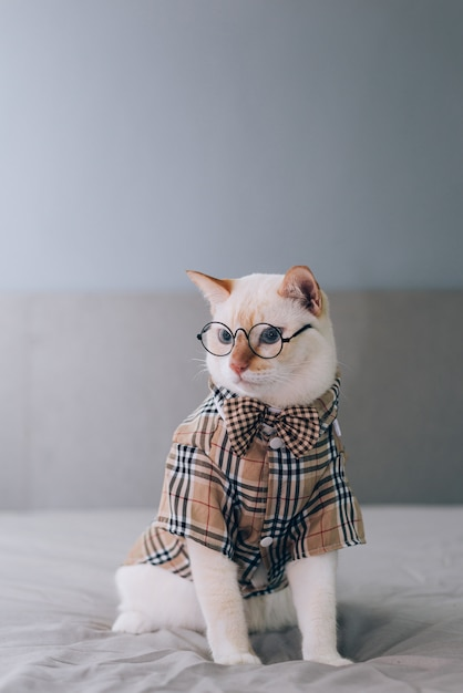 Portrait of white cat wearing glasses, pet fashion concept. white cat lying on bed. Premium Photo