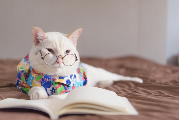 Portrait of white cat wearing glasses and reading book Premium Photo