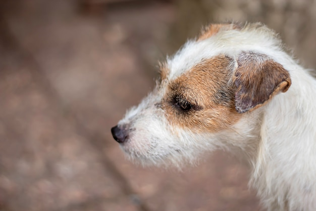 Portrait of white dog on the floor brown brick Premium Photo
