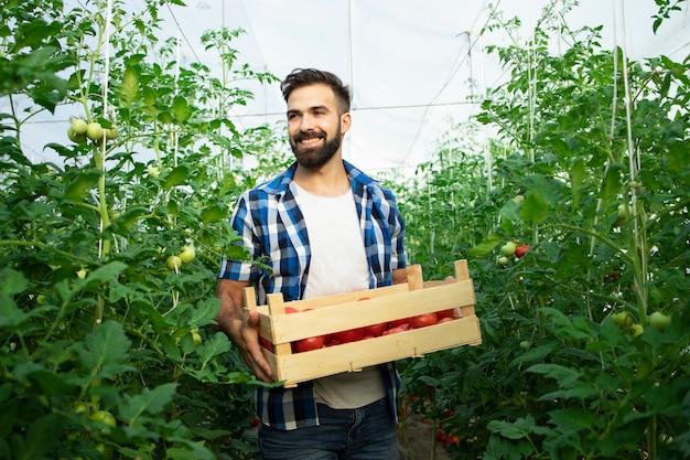 Ritratto di giovane contadino sorridente con verdure di pomodoro appena raccolte e in piedi nel giardino della serra Foto Gratuite