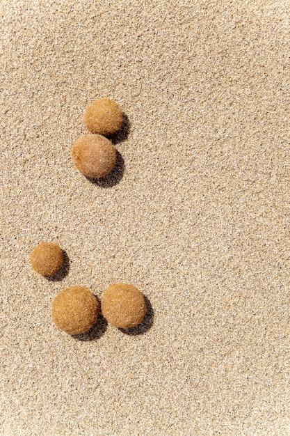 Posidonia oceanica fruits on a mediterranean beach Premium Photo