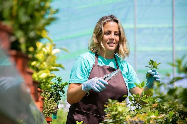 Germogli di taglio giardiniere femminile concentrato positivo, utilizzando potatore in serra. donna che lavora in giardino, coltivazione di piante in vaso. concetto di lavoro di giardinaggio Foto Gratuite