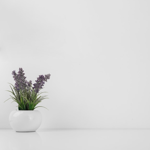 Pot with beautiful flowers Free Photo