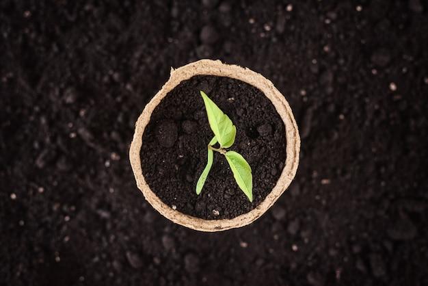 土の上の若い植物とポット Premium写真