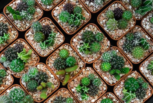 Potted cactus and succulent Premium Photo