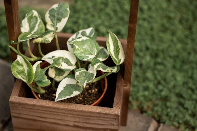Potted houseplant in a wooden box Premium Photo