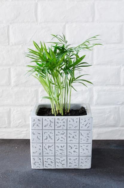 白いレンガの壁の近くの鉢植えの植物 Premium写真