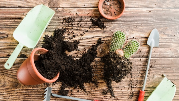 Potted plant with spilled soil; cactus plant and gardening tools on wooden table Free Photo