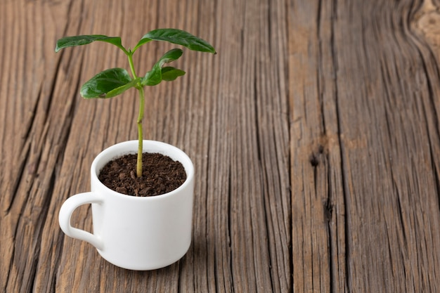 Potted plant on wooden background Free Photo