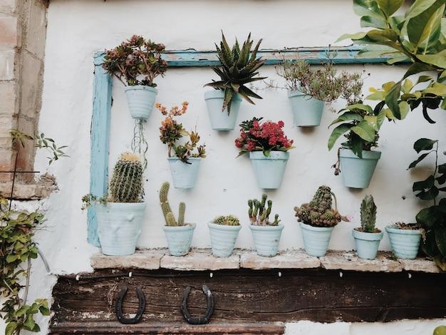 Горшечные растения на белой стене Premium Фотографии