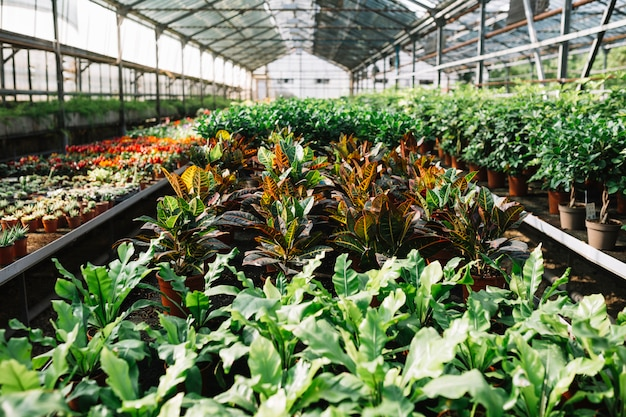 Potted plants growing in greenhouse Free Photo