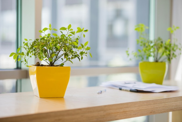 Potted plants in office Free Photo