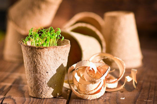 Potted seedlings growing in biodegradable peat moss Premium Photo