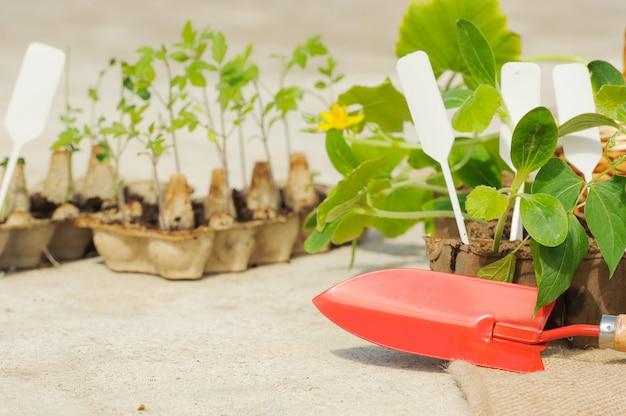 Potted seedlings growing Premium Photo