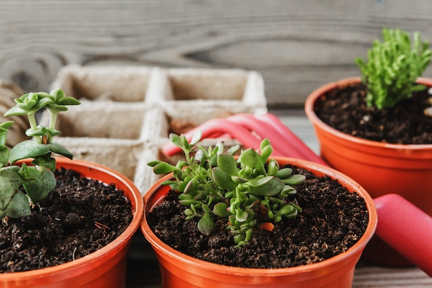 Preparing for spring to transplant plants. pot, shovel, succulents Premium Photo