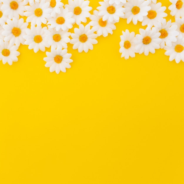 Pretty daisies on yellow background with copyspace at the bottom Free Photo