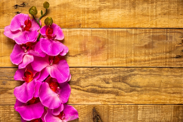 Pretty elegant pink flowers on wooden background Free Photo