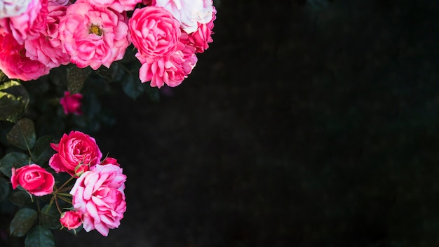 Pretty flowers on dark background photo free download pretty flowers on dark background free photo mightylinksfo