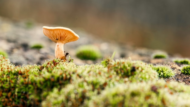 Pretty laminae of a mushroom seen from a low angle Premium Photo