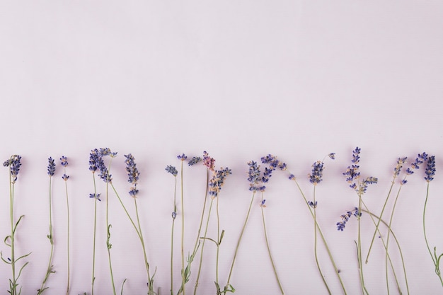 Pretty lavender on lilac background Free Photo