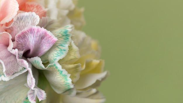 かなりマクロ咲いた花 無料写真