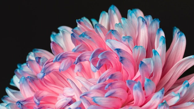 Pretty macro pink and blue flower Free Photo