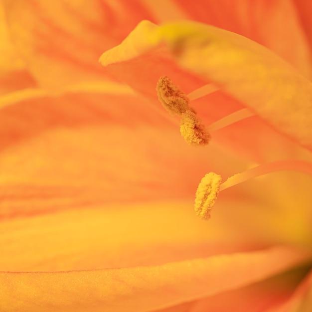 かなりマクロな春の花 無料写真