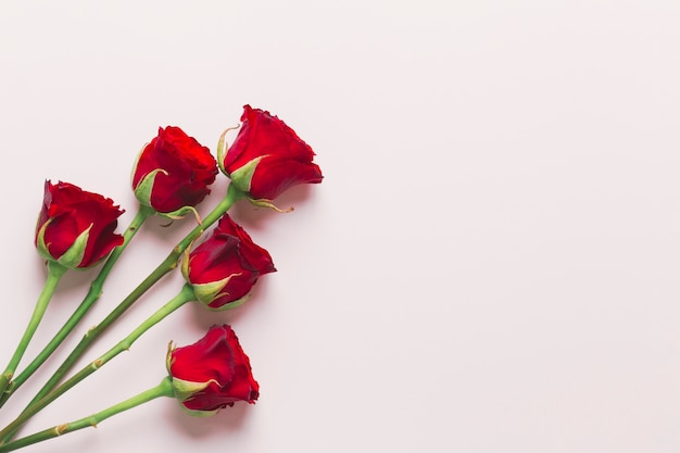 Pretty Red Roses On White Background Free Photo