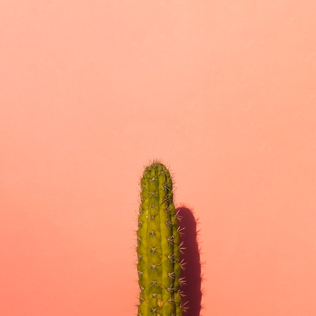 Prickly pear cactus on colored background Free Photo