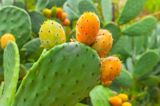 ウチワサボテンとオレンジ色の果物のクローズアップ Premium写真